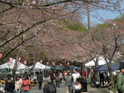 桜まつり210330