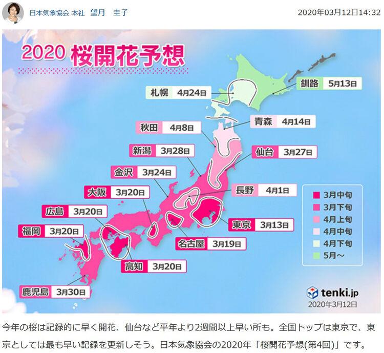 桜開花yosou 750