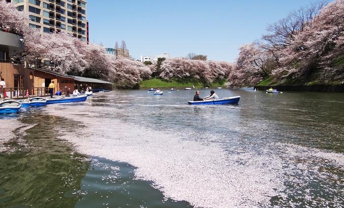 花びらとボート