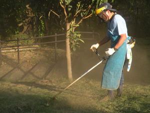刈り払い機で草刈