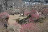梅の小道2