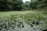 佐倉姥ヶ池