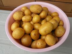 小粒ジャガイモ
