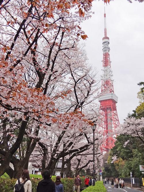 0増上寺境内から見た東京タワー500
