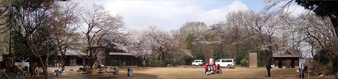 0分校の桜パノラマ1300