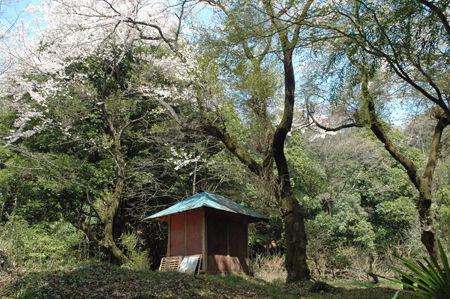 毘沙門天山桜 042 450