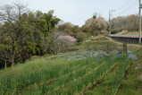 春の里山4