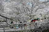 麻生桜雰囲気