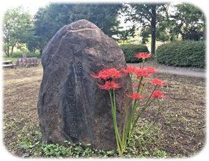 曼珠沙華と石碑300