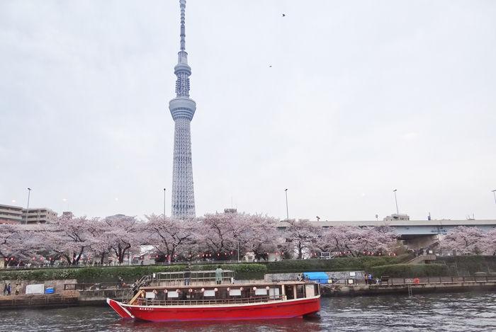 0隅田川桜とスカイツリー1700