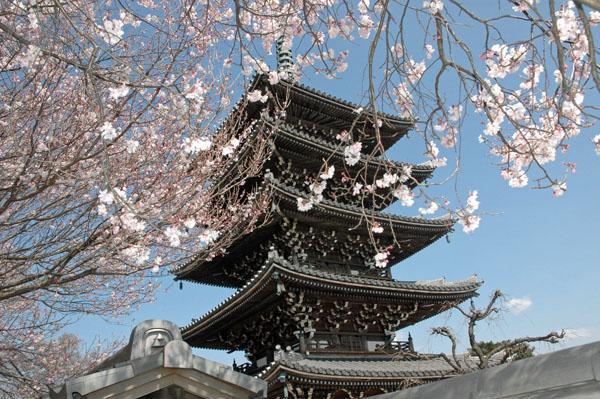 桜の五重塔