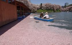 花びらの湖面