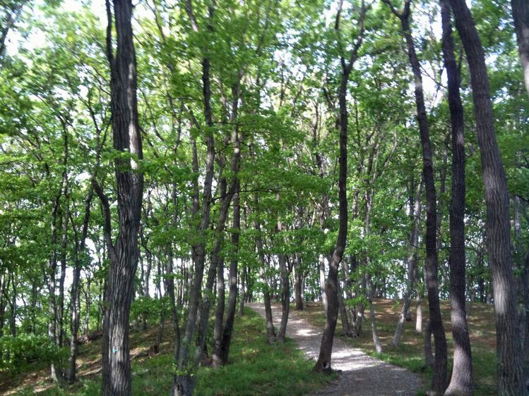 諏訪岳への道