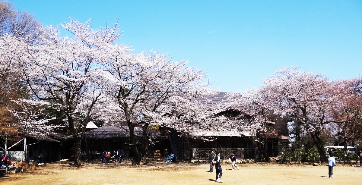 分校の桜1_edited-1