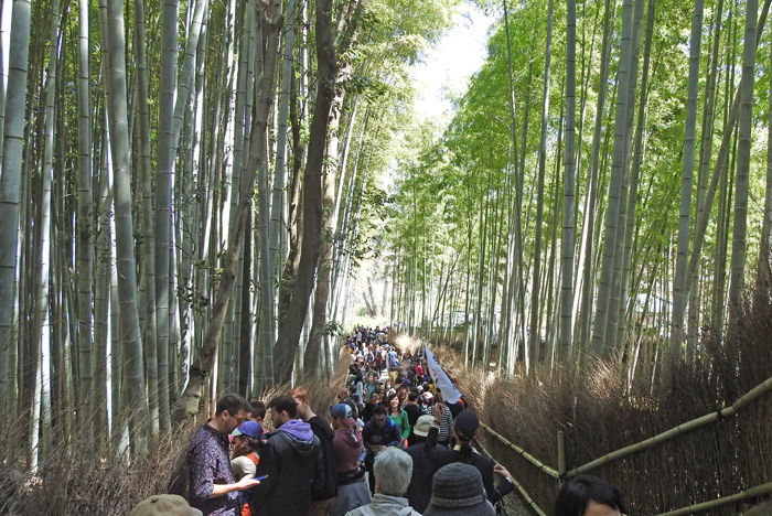 0竹林の道700