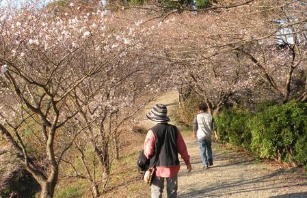 冬桜道並木とハイカー