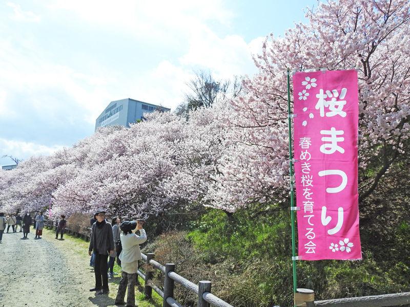 0桜6800