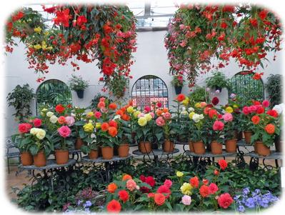 美しい花々が迎える