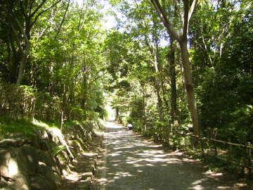 木漏れ日の遊歩道188