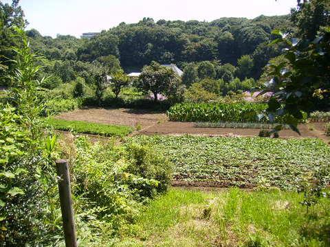 野菜畑193