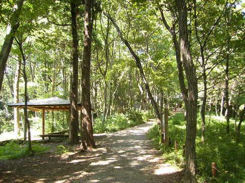 観察林と東屋187