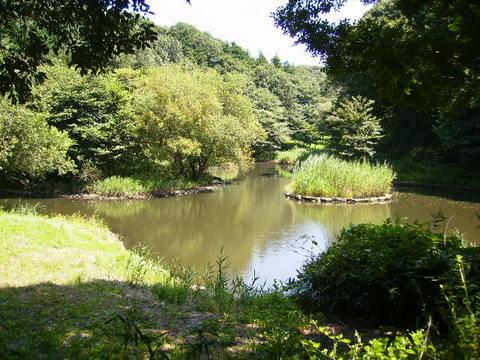 水鳥の池194