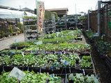 野菜売り場2