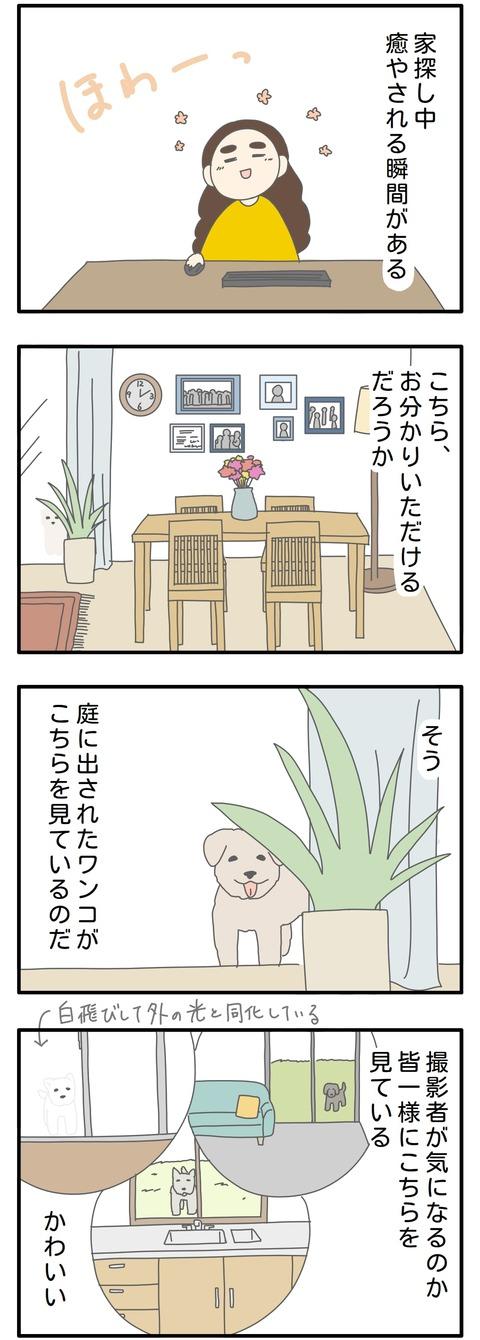 house-dog