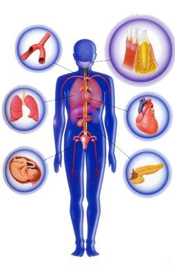 歯科と内臓器官
