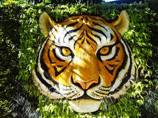 「Tiger Kingdom」
