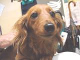「立ち呑み処 きかわ」犬
