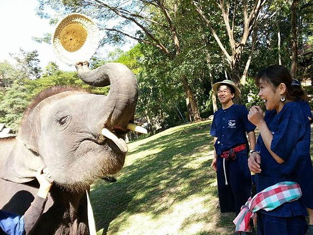 「MAESA ELEPHANT CAMP」