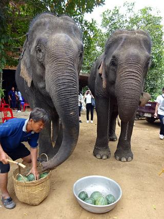 「Sri Satchanalai Elephant Conservation Center」