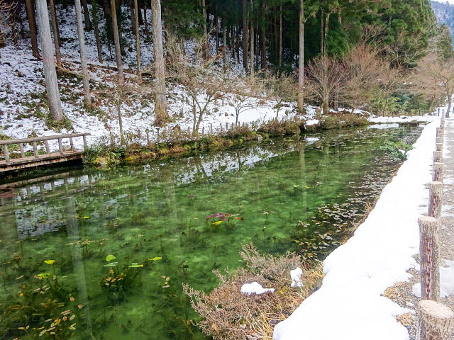 「モネの池」