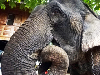 「Sri Satchanalai Elephant Conservation Center」