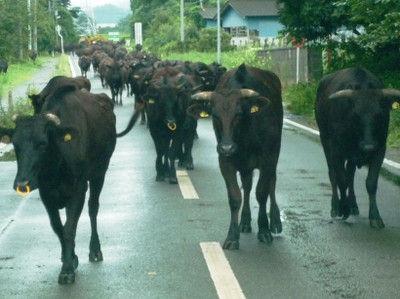 牛のデモ行進