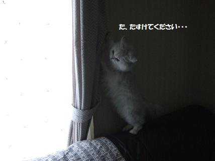 2009_1025みゅう0049