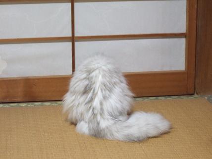 2009_0720幕張LIVESTAND みゅう0014