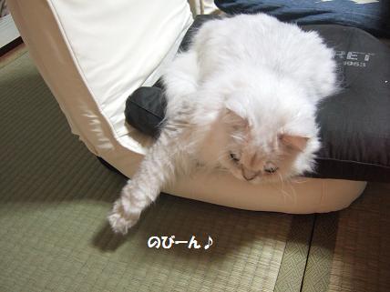 2009_1025みゅう0003
