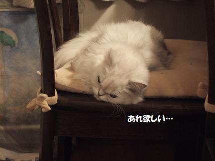 2009_0919みゅう0008