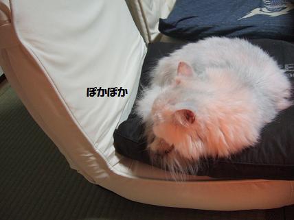 2009_1025みゅう0002