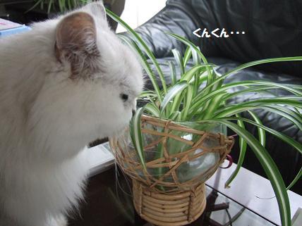 2009_0919みゅう0002