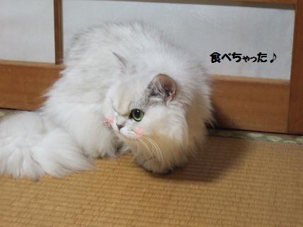 2009_0720幕張LIVESTAND みゅう0015