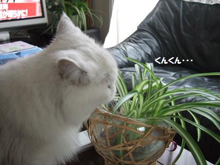 2009_0919みゅう0003