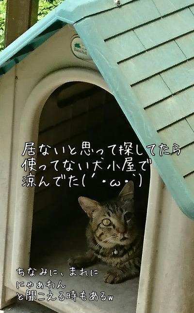 [画像:c808bad2-s.jpg]