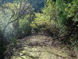 林道ふさがり