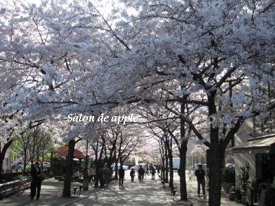 祇園の桜!