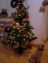 R邸クリスマスツリーとわんちゃん。