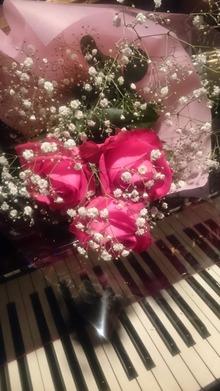 フューシャのバラ