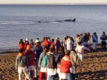 Los chicos de PM dan la bienvenida a los gigantes del mar 1 (1)